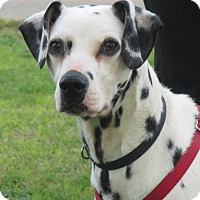 Adopt A Pet :: Casey - Turlock, CA