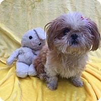 Adopt A Pet :: Goldilocks - Irvine, CA