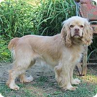 Adopt A Pet :: BLISS - Bedminster, NJ