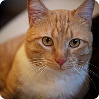 Adopt A Pet :: Azrael - Mountain View, CA