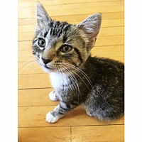 Adopt A Pet :: Carmella - St. Paul, MN