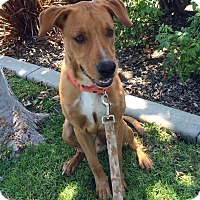 Adopt A Pet :: Beauregard - Mission Viejo, CA