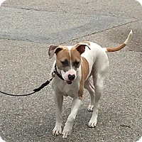 Adopt A Pet :: NORA Great with Kids! - Rowayton, CT