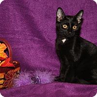 Adopt A Pet :: Jordan (Spayed) - Marietta, OH