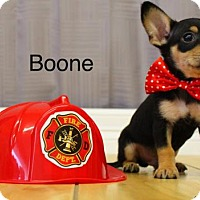 Adopt A Pet :: Boone - Shreveport, LA