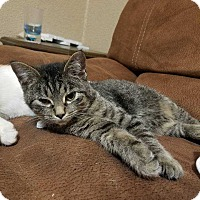 Adopt A Pet :: Frank - South Bend, IN