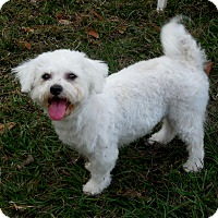 Adopt A Pet :: Molly - Ormond Beach, FL