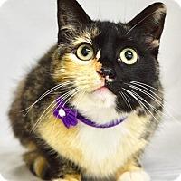 Adopt A Pet :: Maisy - Dublin, CA