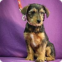 Adopt A Pet :: Frieda - Broomfield, CO