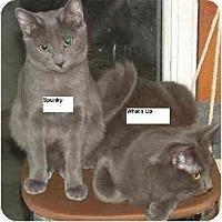 Adopt A Pet :: Spunky - Belton, MO