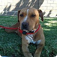 Adopt A Pet :: Honey - Fresno, CA