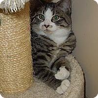 Adopt A Pet :: Winnie - Medina, OH