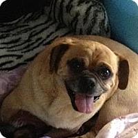 Adopt A Pet :: Homer - Poway, CA
