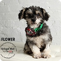 Adopt A Pet :: Flower-adoption pending - Omaha, NE