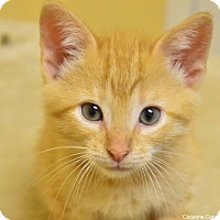 Adopt A Pet :: Daryl - Island Park, NY