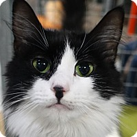 Adopt A Pet :: Penelope - Redwood City, CA