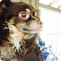 Adopt A Pet :: Silas - Cashiers, NC