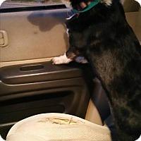Adopt A Pet :: Dinah  (Has application) - Washington, DC
