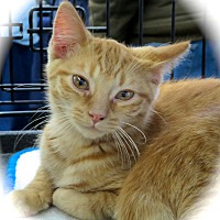 Adopt A Pet :: Juicer - Fort Wayne, IN