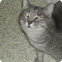 Adopt A Pet :: O'Malley - Bonita Springs, FL
