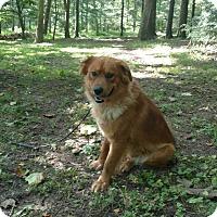 Adopt A Pet :: Rigby - Capon Bridge, WV