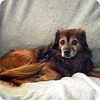 Adopt A Pet :: Chip - Beavercreek, OH