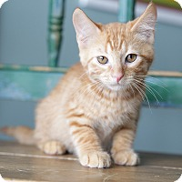 Adopt A Pet :: Bert - San Antonio, TX