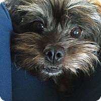 Adopt A Pet :: Patsy - Dayton, OH