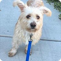Adopt A Pet :: Tanzi - Las Vegas, NV