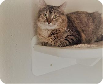 Domestic Mediumhair Cat for adoption in Woodland Park, New Jersey - Fleur Petite