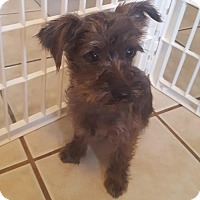 Adopt A Pet :: Leopold - St. Louis Park, MN