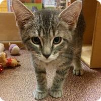 Adopt A Pet :: Rigby - Warrenton, MO