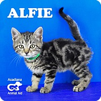 Adopt A Pet :: Alfie - Carencro, LA