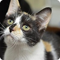 Adopt A Pet :: Sparrow	161336 - Atlanta, GA