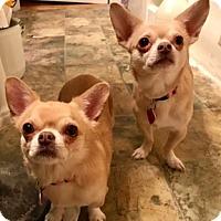 Adopt A Pet :: Mickey & Minnie - ST LOUIS, MO