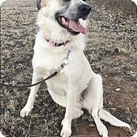 Adopt A Pet :: Josie - Tulsa, OK