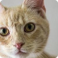 Adopt A Pet :: E. J. - Houston, TX