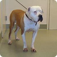 Adopt A Pet :: Hogan - Wildomar, CA