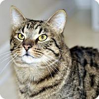 Adopt A Pet :: Jonas - Liberty, NC