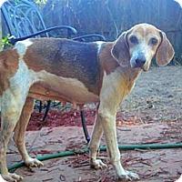 Adopt A Pet :: Lindie! - St, Augustine, FL