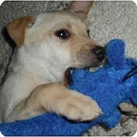 Adopt A Pet :: Kringle - Cumming, GA