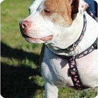 Adopt A Pet :: Miss B - Justin, TX