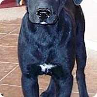 Adopt A Pet :: Milton - Gilbert, AZ
