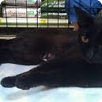 Adopt A Pet :: Grace - Modesto, CA