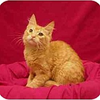 Adopt A Pet :: Brandon - Sacramento, CA