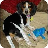 Adopt A Pet :: Moet - Novi, MI