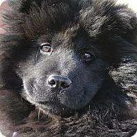 Adopt A Pet :: Pepper - Tucker, GA