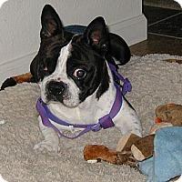 Adopt A Pet :: Andre - Temecula, CA
