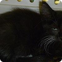 Adopt A Pet :: Dexter - Hamburg, NY