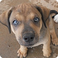 Adopt A Pet :: Billy - dewey, AZ